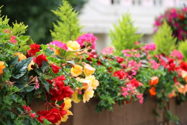 Top 3 viegli audzējami dārza ziedi 2020. gadā